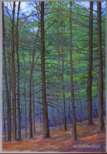 Pine trees-green
